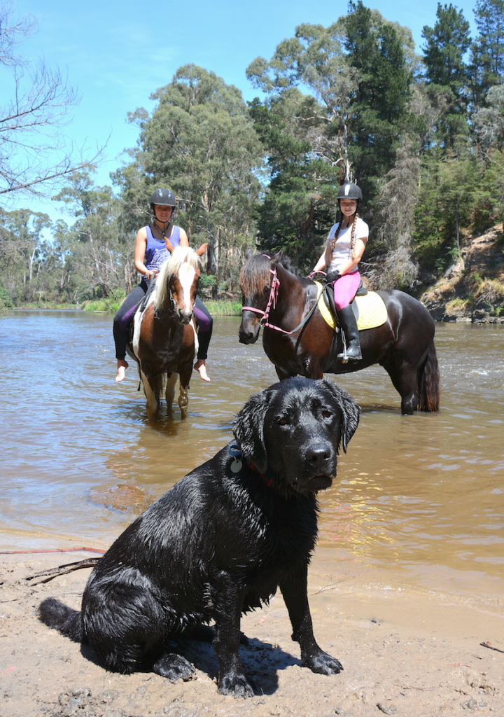 Jane says most dogs using the trail are friendly with horses.