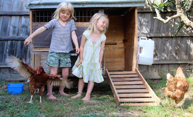 Warrandyte chickens